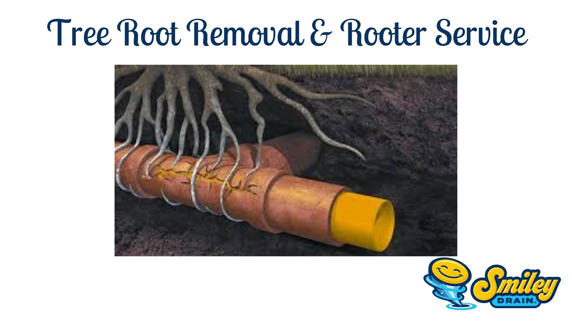 tree root removal and rooter service